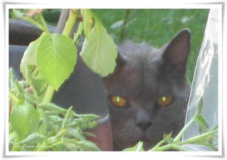 Ramsès au jardin