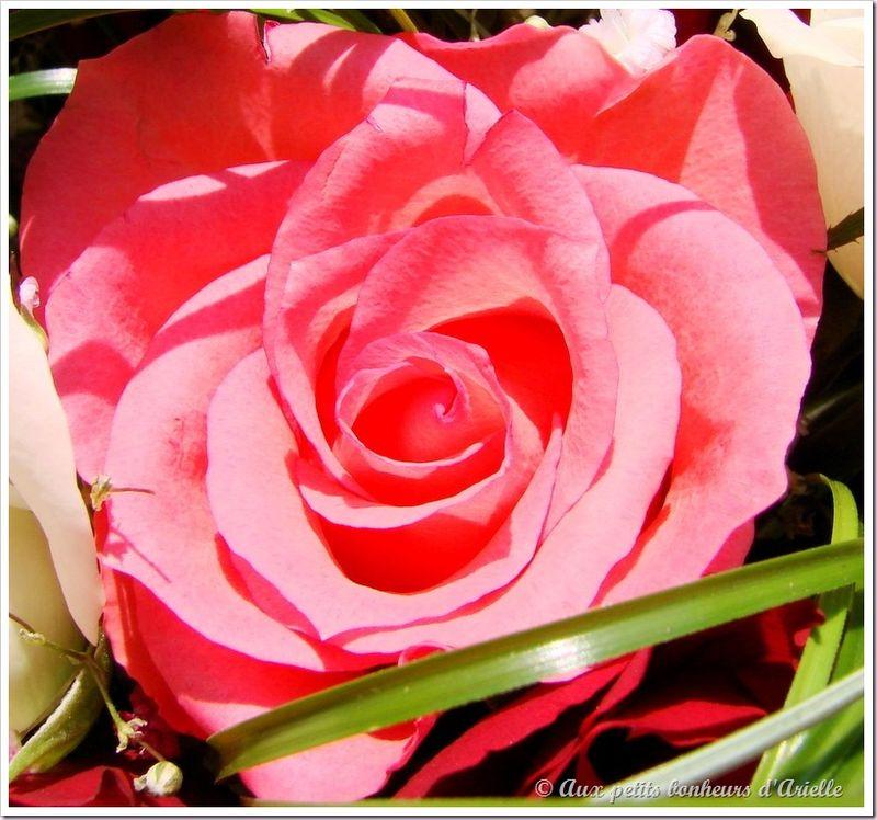 Bouquet de fête des mères (11)