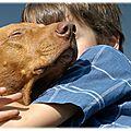 Expliquer la mort de l'animal de compagnie à un enfant