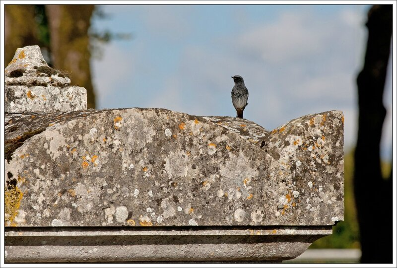 Aulnay RQ tombe 131014
