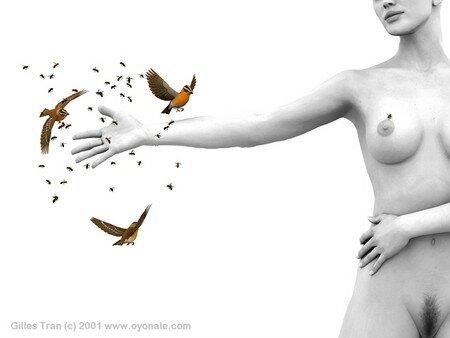 oiseaux_1_