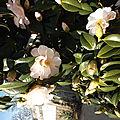 Les fleurs de l' hiver, on est en février