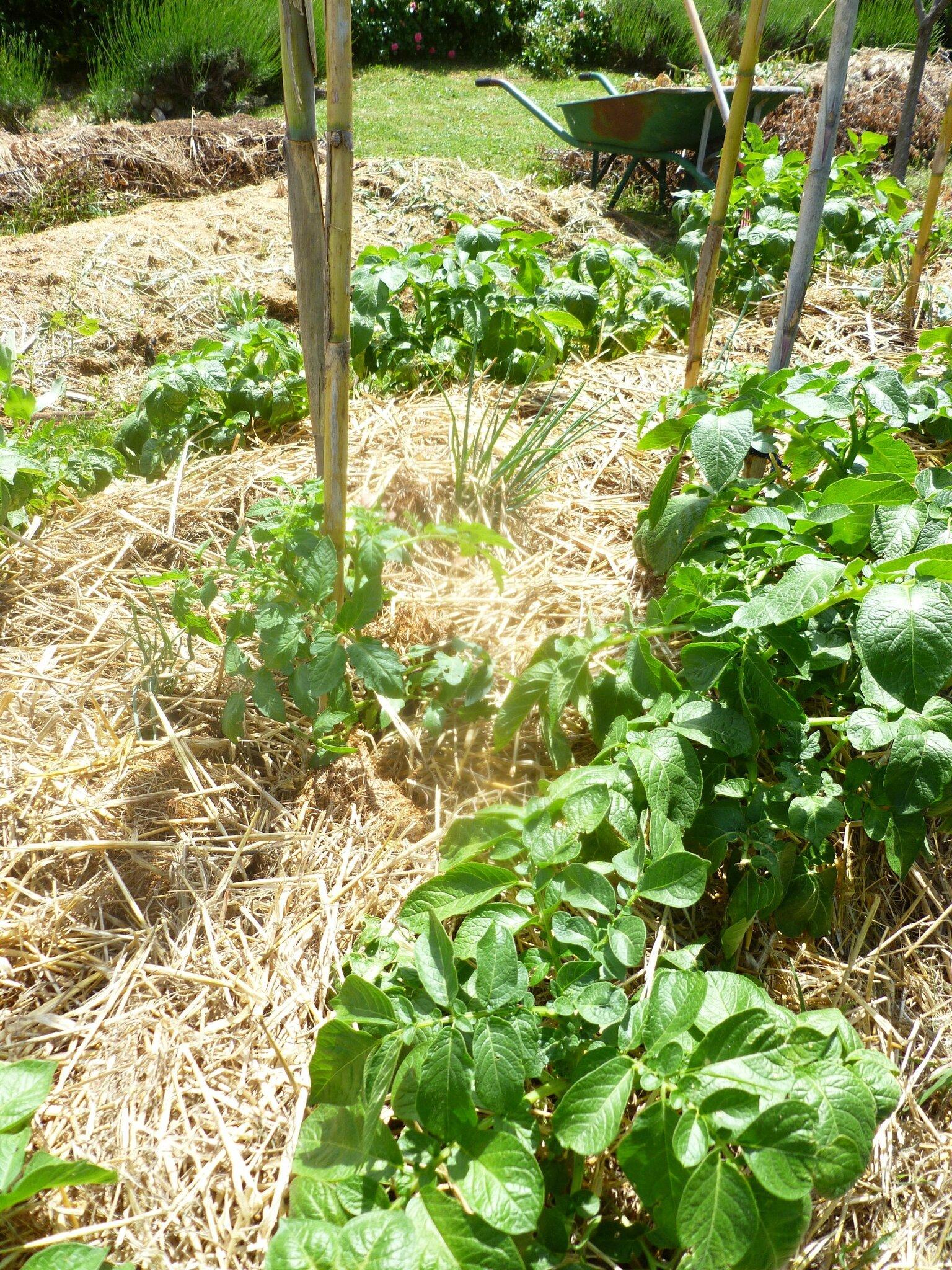 Potager en permaculture episode 3 l 39 telier de stell - Exemple de potager permaculture ...