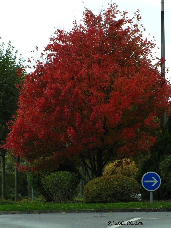 arbre Noisy rouge