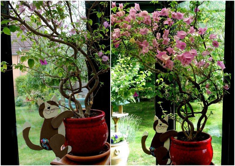 2014-06 Jardin en juin