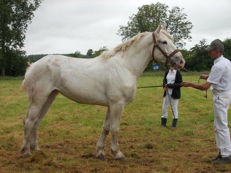 Déesse de Coyecques - 21 Juin 2016 - Concours d'élevage local - Bonningues les Ardres - 3e (3 ans)