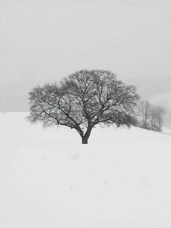 arbre47