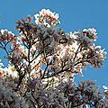 fleurs-3 (8)