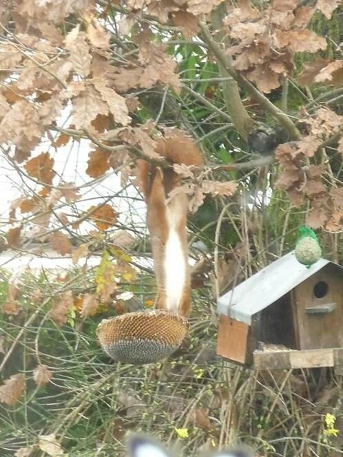 1 écureuil