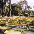 jardin Pamplemousse_77