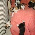 2008 04 17 Les petits chatons de Blanco et Papillon qui s'amusent