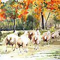 Collection Aquarelles : animaux dans paysages
