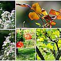 Louna et images d'automne