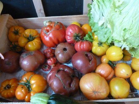 19-tomates du jour 3
