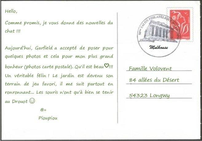 Quartier Drouot - Carte postale chat