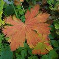 Vercors, automne 2009