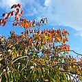 Feuilles d'automne devant l'école