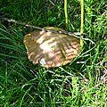 Cèpe d'été en parasol dans la fougère au Serròt de Boish.