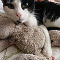 Un petit chat amoureux d'un doudou