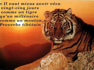 tigreM
