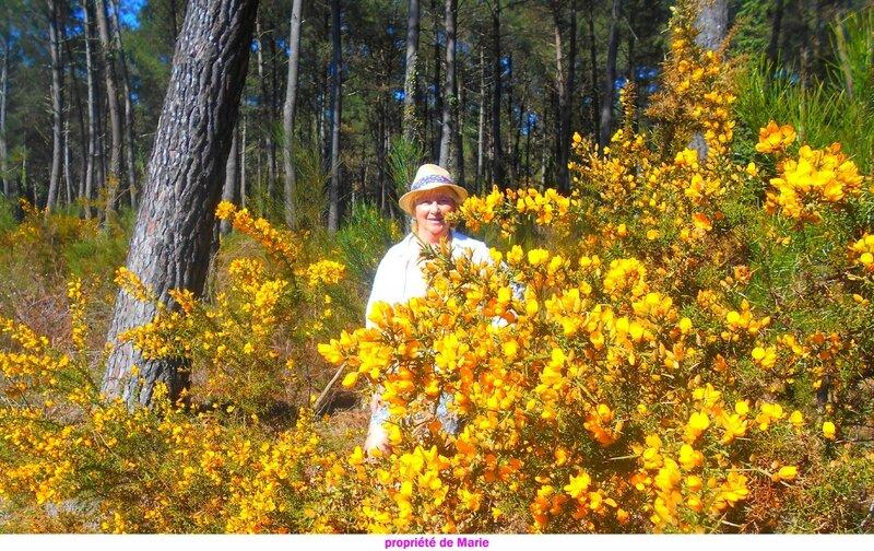 fleurjaune10032017 (8)a