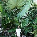 Découverte d'une nouvelle race de palmier...