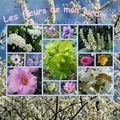 Mosaïque Fleurs de mon jardin