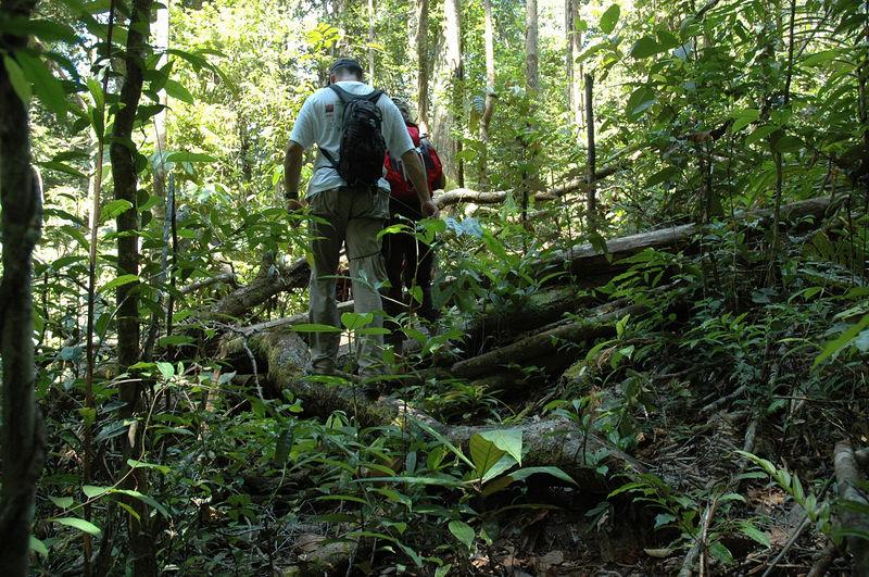 Enjamber des troncs d'arbres ....