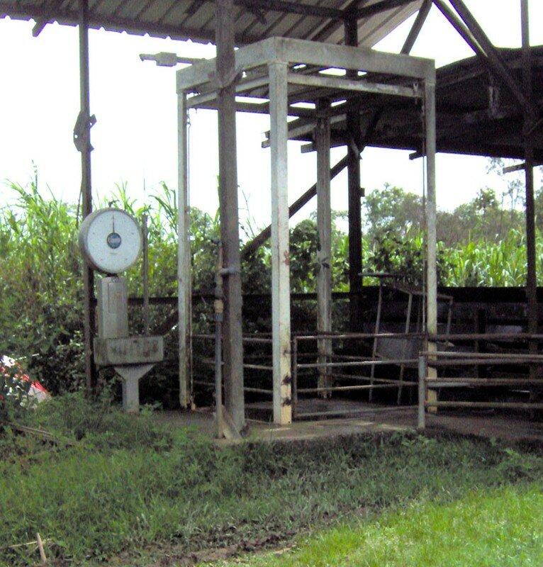 balance pour peser les porcs photo de la ferme st jean bpa et bprea 2008. Black Bedroom Furniture Sets. Home Design Ideas
