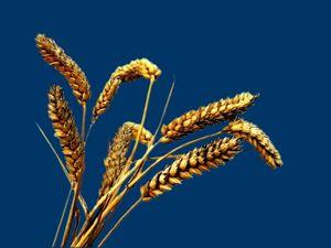 blé cb