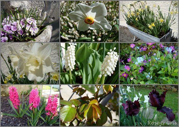 printemps 2011 au jardin 2 pf