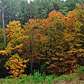 Linxe automne 24101515