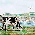 la vache normande (aquarelle)