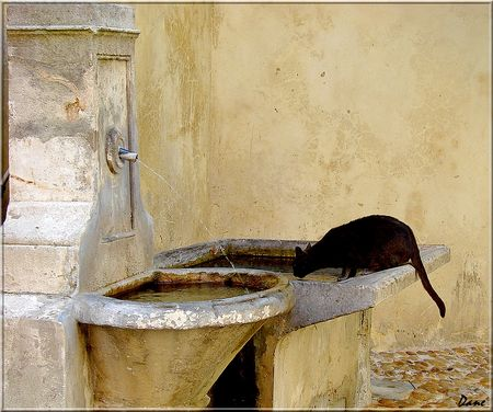 1_chat_fontaine