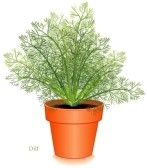 12797408_dill_herb_plant