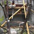 zoo 030807 019bis