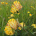 Fleurs dimanche (3)