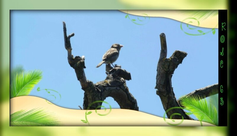Rose63 sur mon arbre l'oiseau