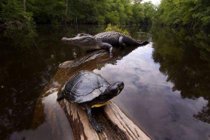 wildlife_turtle