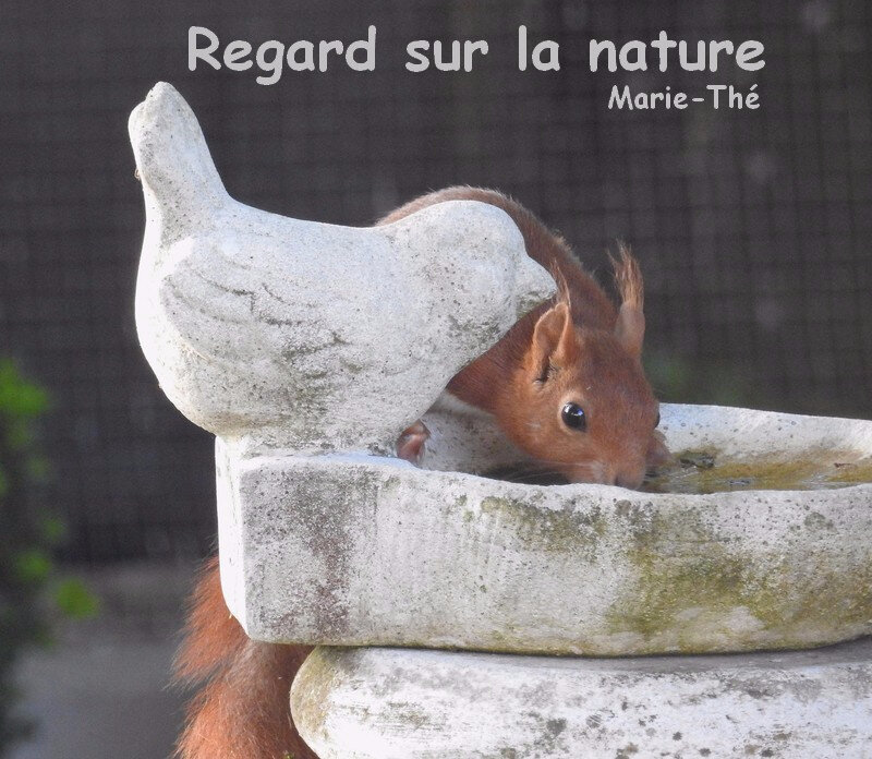blog regard sur la nature