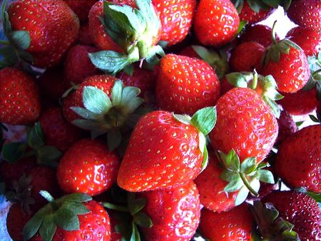 fraises_fraiches