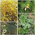 Jardin avril (10)