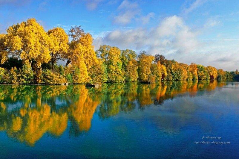 badou arbre d'automne