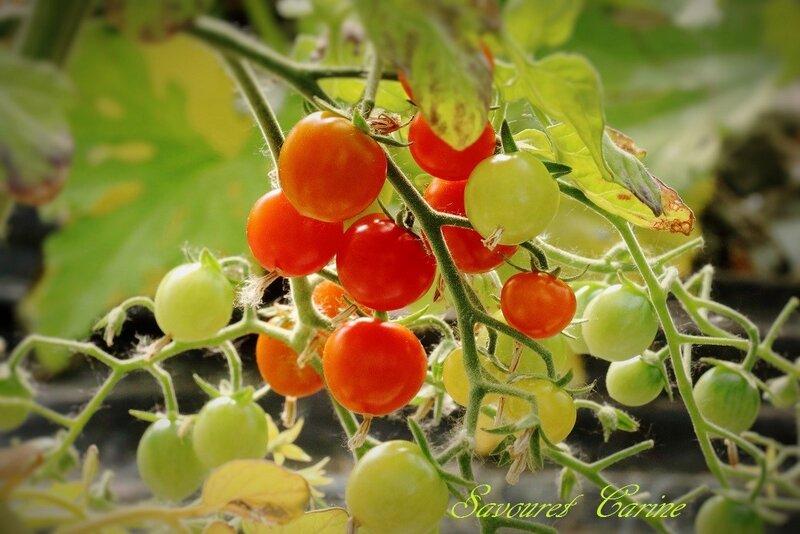 Tomates_Cerises_1