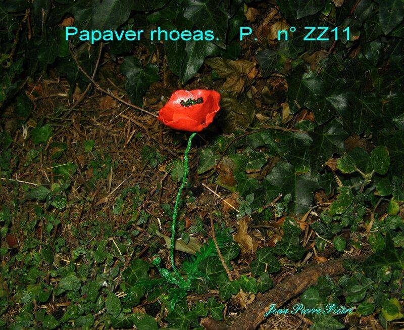 papaver rhoeas n° ZZ 11