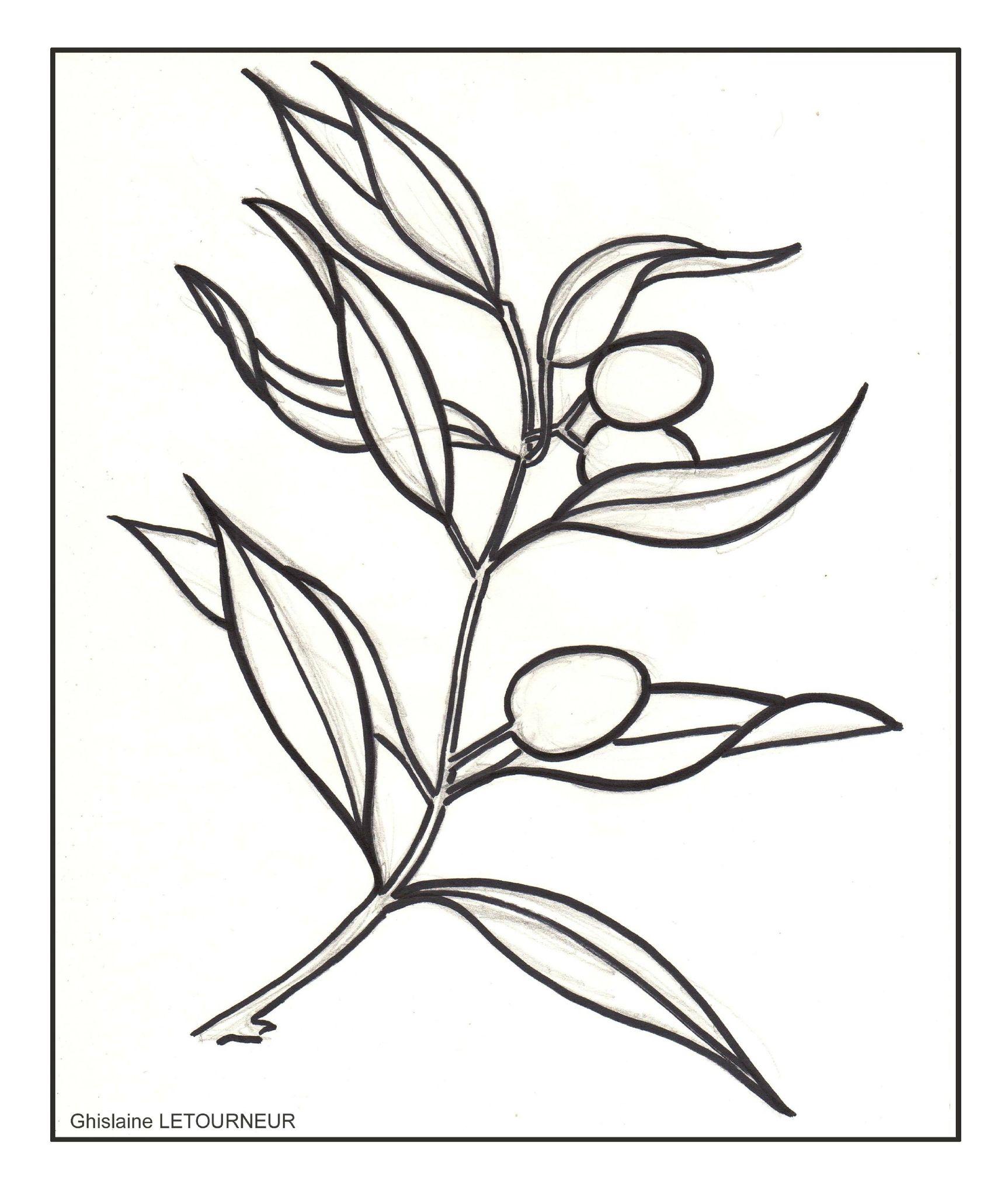dessin coloriage branche d olivier photo de n. Black Bedroom Furniture Sets. Home Design Ideas