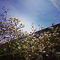 Le printemps sur instagram : fleurs de cerisier et feuilles ensoleillées