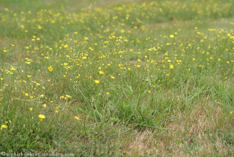 heure fleurs jaunes
