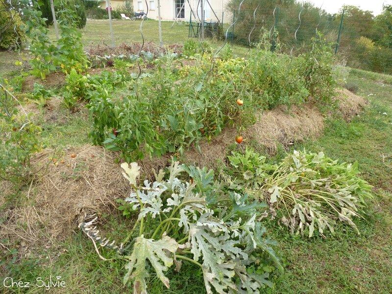Potager permaculture septembre02