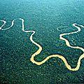 Arrêtez le massacre a la tronconneuse en amazonie